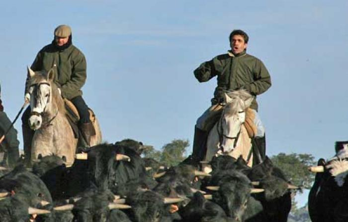 Conducción de vacas en 2010