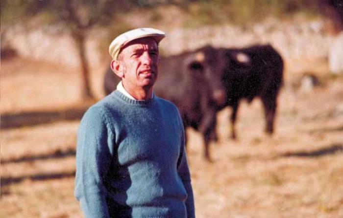 Entre los toros al comienzo de la ganadería