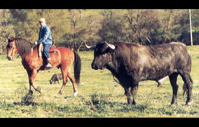 Foto Visita diaria a los toros en Monteviejo