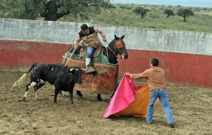 Victorino saca a una vaca urcola del caballo.