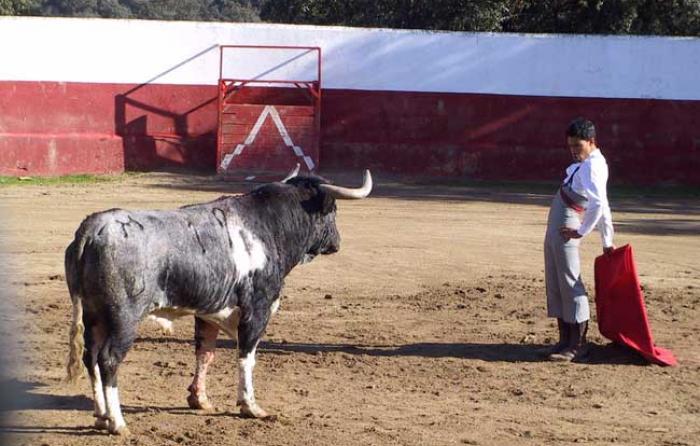 Estudiando al de Monteviejo antes de empezar a torear