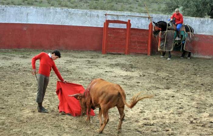 Natural de David Martín a una vaca de Urcola.